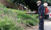 Expertos evaluarán brotes de dengue en Jalisco